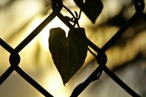 AJ_Hearts
