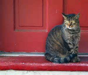 Cat at Door from Bing Images
