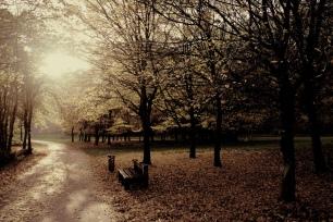 Blog_AutumnLeaves