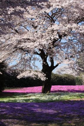 Blog_CherryBlossom.jpg