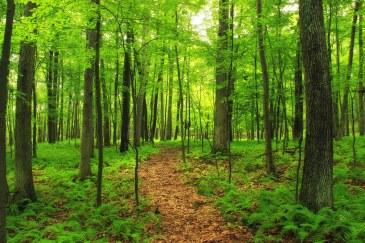 Blog_ForestPath