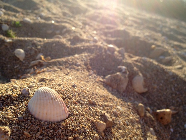 Blog_ShellsInSand
