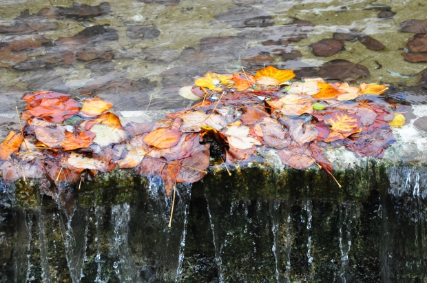 Blog_WaterfallLeaves.jpg