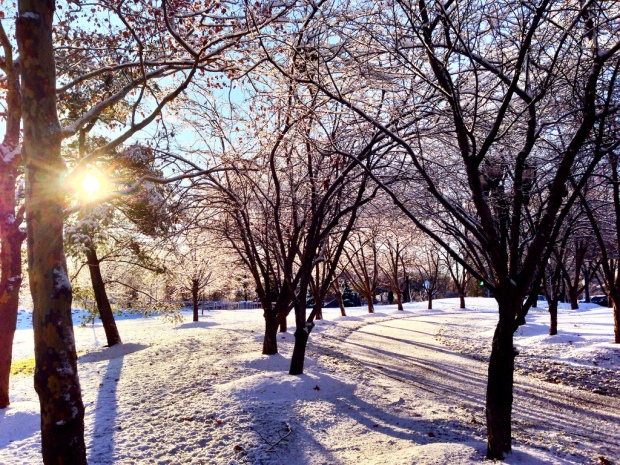 blog_snowysunrise