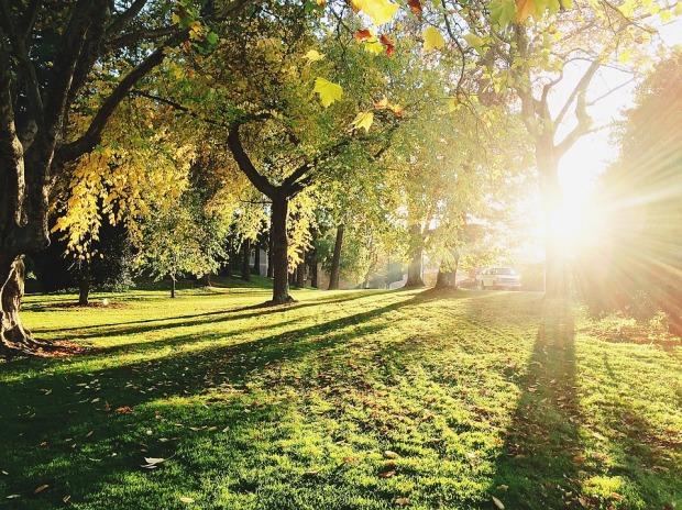 Blog_TreeShadows