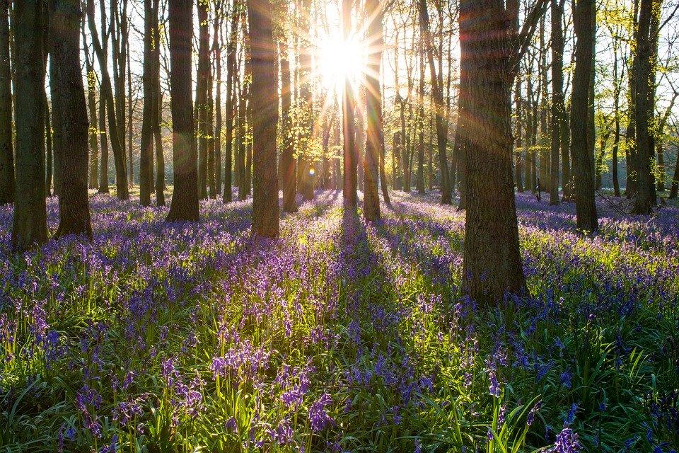 Spring_SunriseTrees